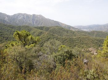 coto-de-caza-mayor-sierra-marbella-8